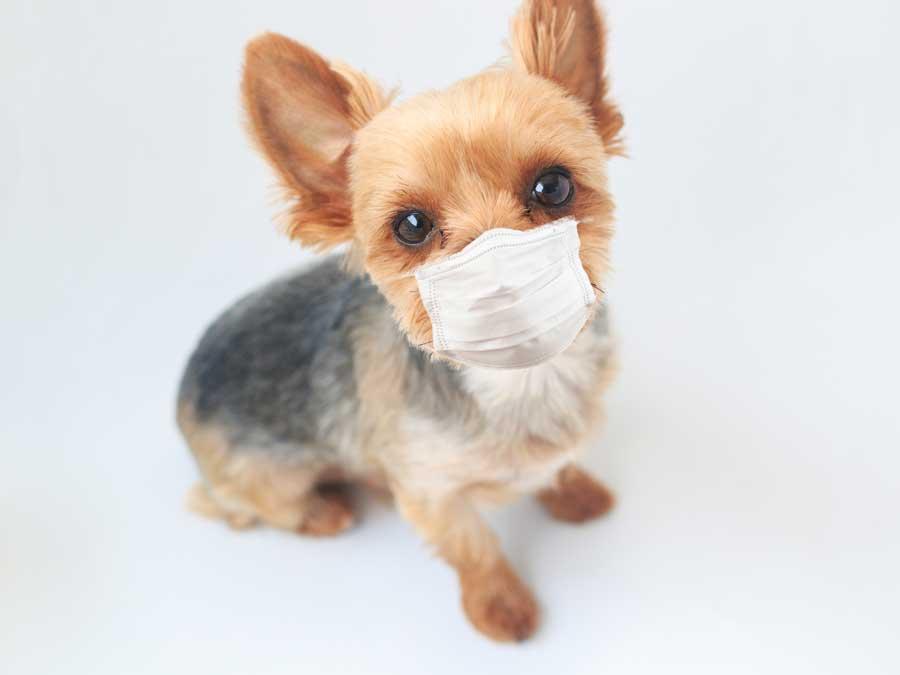 令和2年度の横須賀市、三浦市の狂犬病集合注射が中止となりましたイメージ画像
